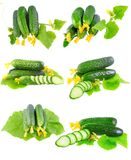 Collage  of Cucumbers on white background. Royalty Free Stock Images