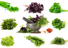 Collage of culinary greens. Over the white Royalty Free Stock Photography