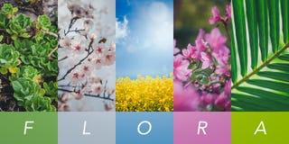 Collage d'été, fond naturel et texture, une collection d'images verticales pour vos histoires images stock