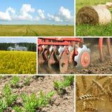 Collage d'agriculture Image libre de droits