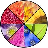 Collage d'arc-en-ciel des fleurs dans le cadre circulaire Image libre de droits