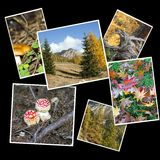 Collage d'automne Photographie stock libre de droits