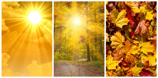 Collage d'automne Photographie stock