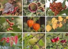 Collage d'automne Images libres de droits