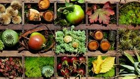 Collage d'autunno Fotografia Stock Libera da Diritti