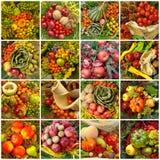 Collage d'autunno della raccolta Fotografia Stock Libera da Diritti