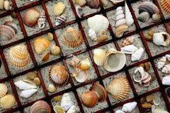Collage d'interpréteur de commandes interactif de mer photos stock