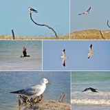 Collage d'oiseau Photo stock