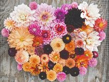 Collage of Dahlia Flowers stock images