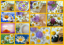 Collage Daisy Royalty Free Stock Photo