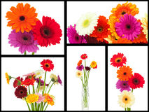 Collage of daisy flowers Stock Photo