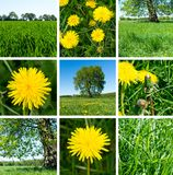 Collage of dandelions, gras and trees. Summer set. stock image