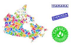 Collage de ahorro de la naturaleza del mapa de Canadá con las mariposas y las filigranas rasguñadas stock de ilustración
