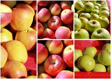 Collage de Apple Foto de archivo