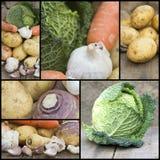 Collage de compilation de nourriture fraîche avec un thème de vegetab d'hiver Image stock