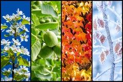 Collage de cuatro estaciones fotos de archivo