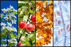 Collage de cuatro estaciones foto de archivo libre de regalías