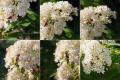 Collage de différentes photos des abeilles rassemblant le miel photo stock
