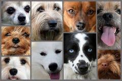 Collage de différents visages de chien images stock