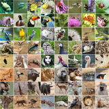 Collage de faune Photo stock