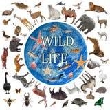 Collage de faune marchant autour du monde photo stock