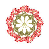 Collage de fleur d'Alstroemaria Photos libres de droits