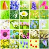Collage de fleur de ressort Images libres de droits
