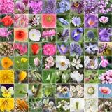 Collage de fleur de source Photo stock