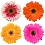 Collage de fleur sur le blanc Photographie stock
