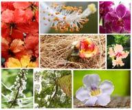 Collage de flore Image stock