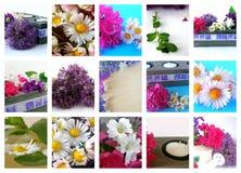 Collage de flores Foto de archivo libre de regalías