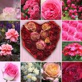 Collage de flores color de rosa y del corazón color de rosa de la flor Imagenes de archivo