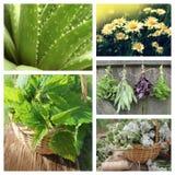 Collage de hierbas Foto de archivo libre de regalías