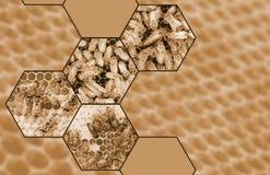 Collage de la abeja de la miel Fotografía de archivo