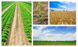 Collage de la agricultura Fotografía de archivo libre de regalías