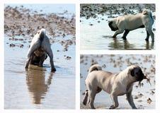 Collage de la caza del perrito del barro amasado fotos de archivo