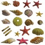 Collage de la concha marina paquete grande Foto de archivo