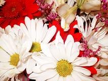 Collage de la flor Fotos de archivo