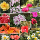 Collage de la flor Foto de archivo