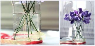 Collage de la flor Foto de archivo libre de regalías