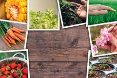 Collage de la foto de la agricultura Imágenes de archivo libres de regalías