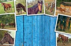 Collage de la foto de los caballos fotografía de archivo