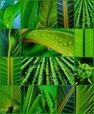 Collage de la hierba Imágenes de archivo libres de regalías