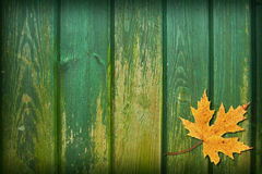 Collage de la hoja Imagen de archivo libre de regalías