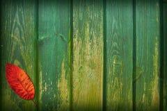 Collage de la hoja Foto de archivo libre de regalías