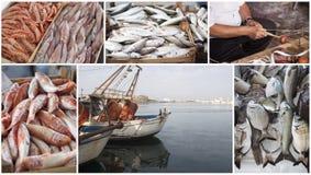 Collage de la industria pesquera  Fotografía de archivo libre de regalías