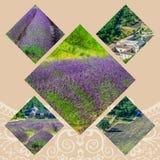 Collage de la lavanda delante del abbaye de Senanque en Provence Fotografía de archivo
