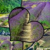Collage de la lavanda delante del abbaye de Senanque en Provence Imagen de archivo