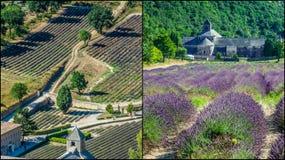 Collage de la lavanda delante del abbaye de Senanque en Provence Fotografía de archivo libre de regalías