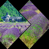 Collage de la lavanda delante del abbaye de Senanque en Provence Imagen de archivo libre de regalías